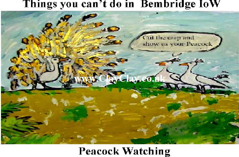 'Peacock Watching' 'Things you can't and can do in Bembridge IW' Postcard based on original painting by BB Bango