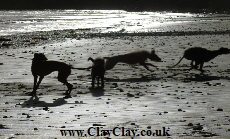 'Lurcher dogs on the beach at Piory Bay'. Postcard based on original Bango Photograph.